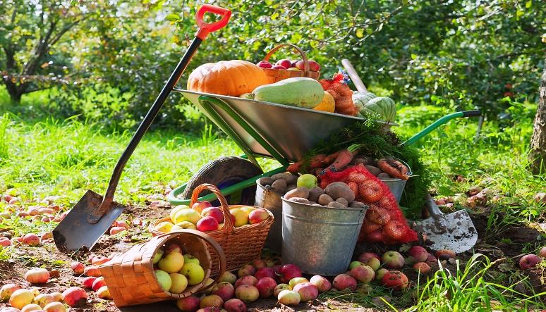Čo potrebuje záhrada v októbri